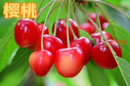 车厘子和樱桃的区别「4个不同」第2张图