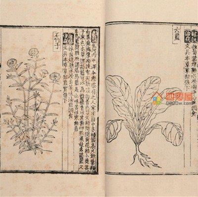 救荒本草是哪个朝代的「历史」-第2张图